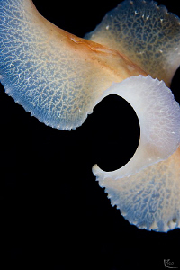 Abstract view of a free-swimming flatworm. by Rico Besserdich